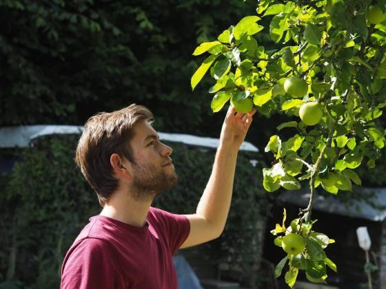allotment, grow your own, apples, grow, garden, gardening, budget, food, city