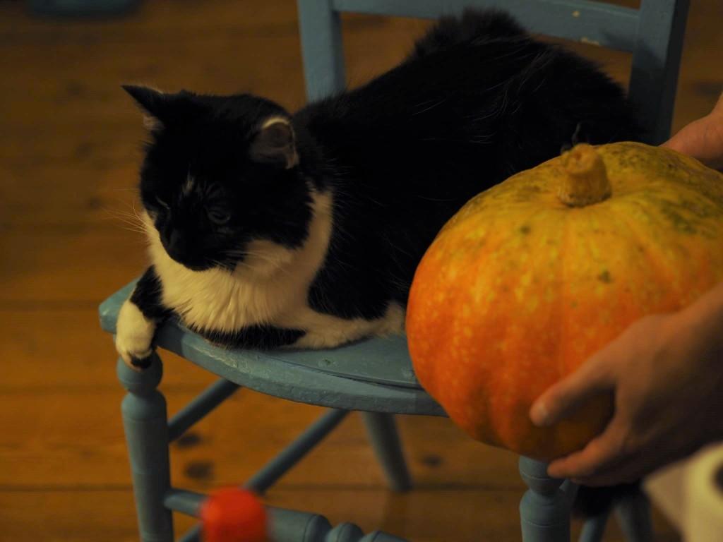 pumpkin, pumpkin soup, food, meal, meals, recipe, autumn, october, halloween, cat, squash, fruit, veg, cheap, easy, make, recipes, budget