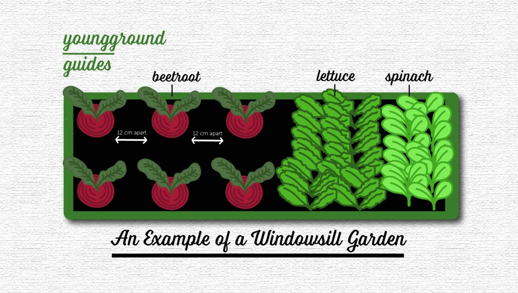 guide, growing, salad, vegetables, veg, salads, lettuce, leaves, greens, green, beets, beetroot, food, food blog, yum, tasty, thrifty, gardening, garden, grow your own food, lifestyle, living