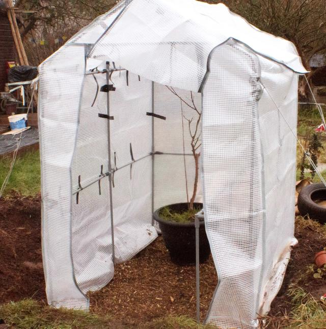 greenhouse, wilko, cheap, thrifty, lifestyle, living, garden, gardening, grow your own food, foodies, food, vegetables, fruit, sowing, growing, allotment, plot, save money, alternative, how to, cost
