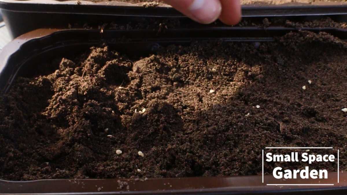 Small Space Garden Episode 2 | Sowing Tomatoes and Peppers