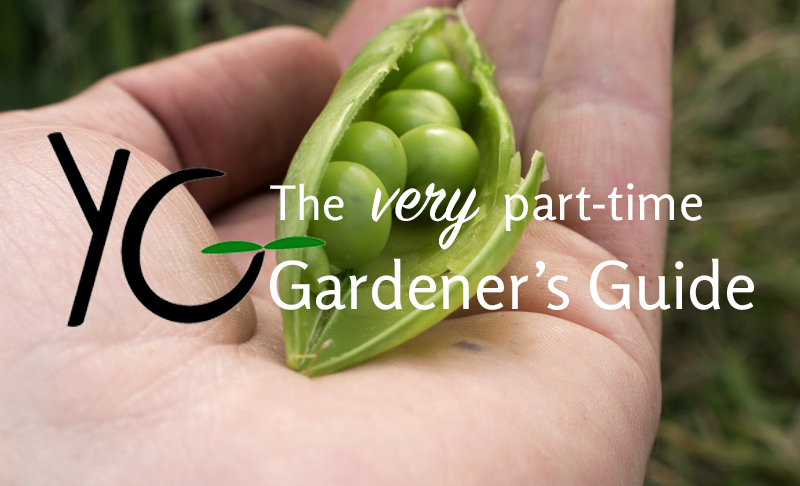 youngground, gardening, garden, grow your own food, easy to grow, how to grow food, allotment, blog, blogging, blogger, tips, hints, guide, guide to growing your own, growing food, living off of the land, no time, working, city, living, lifestyle blog