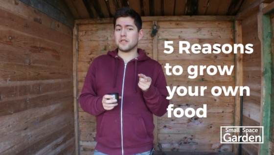 grow your own, garden, gardening, budget, growing food, growing your own food, starting your own garden, starting a garden, how to grow, chillies, plants, tomatoes, how to grow tomatoes, why grow your own, why grow food, environment, how to help the environment, small space garden, youtube, gardening videos, video, videos, new year, city gardening, how to garden in the city, windowsill garden, windowsill